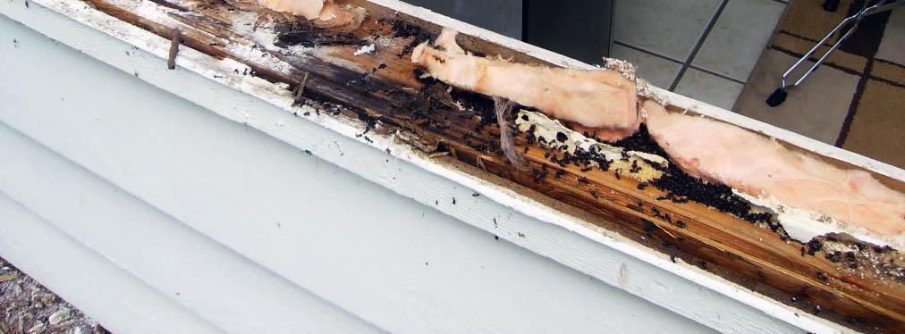 муравьи жили в каркасном доме в нише подоконника
