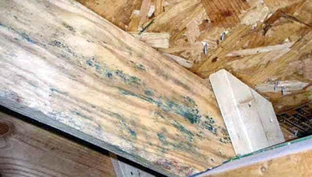 древесина пораженная грибком