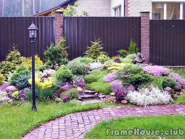 растения для загородного участка